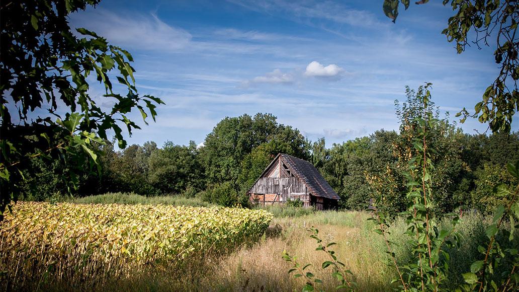 Der Spreewald als Rennrad-Region